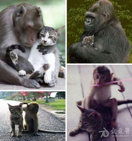 但是它们的友情图片