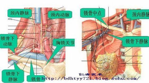 从解剖功能的角度透析盆底肌Pelvic floor 好文收藏