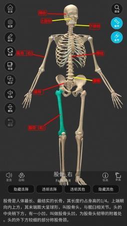 佩吉特骨病(變形性骨炎)的病例、臨床特點以及治療(附【維薩里3D解剖】圖釋)