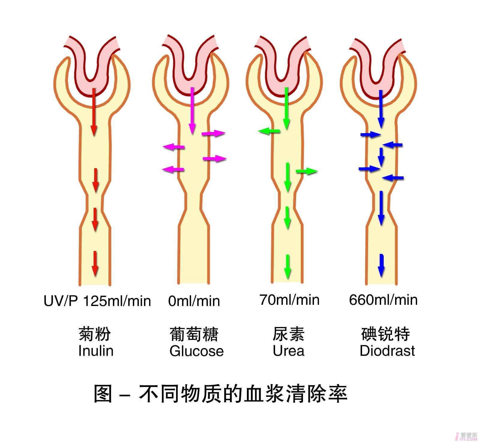 20-不同物质的血浆清除率 .jpg