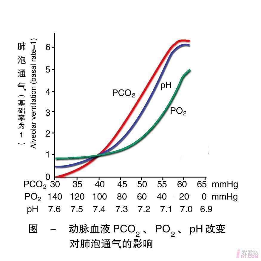 22-动脉血液PCO2 PO2 pH改变对肺泡通气量的影响 .jpg