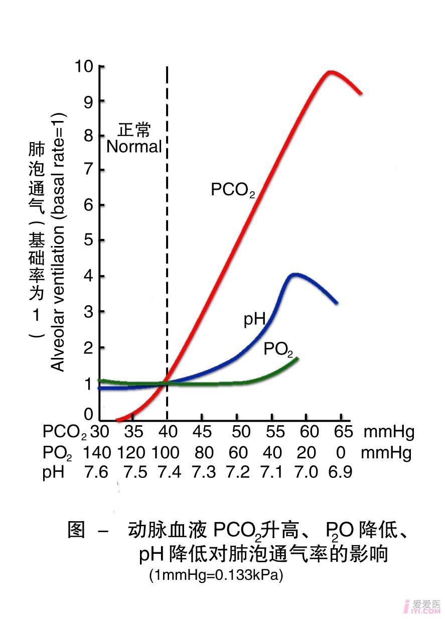 23-动脉血PCO2升高 PO2降低 pH降低对肺泡通气率的影响 .jpg