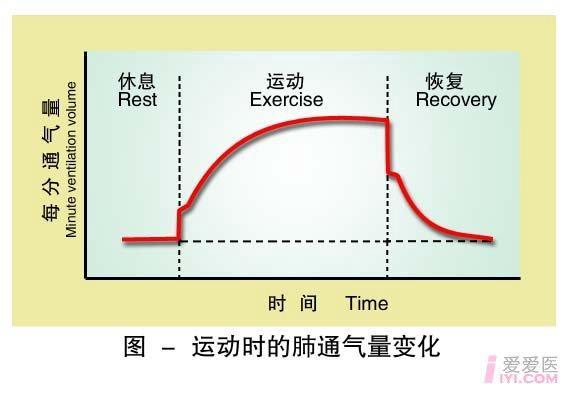 30-运动时的肺通气量变化.jpg
