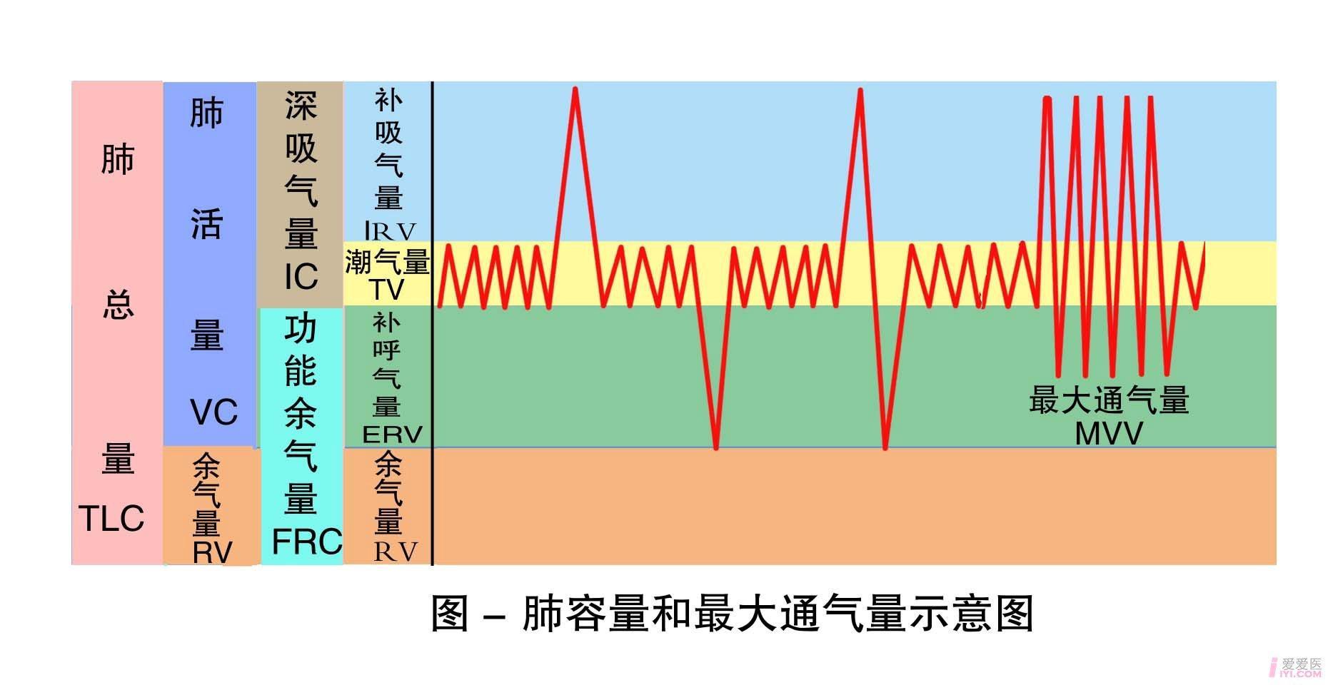 5-肺容量和最大通气量示意图 .jpg