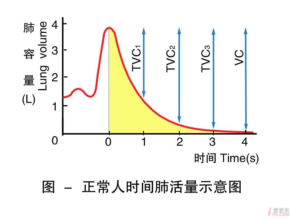 6-正常人时间肺活量示意图 .jpg