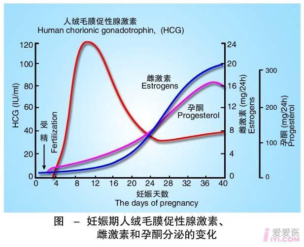 2-妊娠期人绒毛膜促性腺激素、雌激素和孕酮分泌的变化.jpg