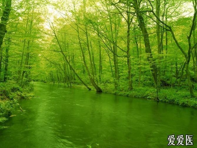 希望的绿色