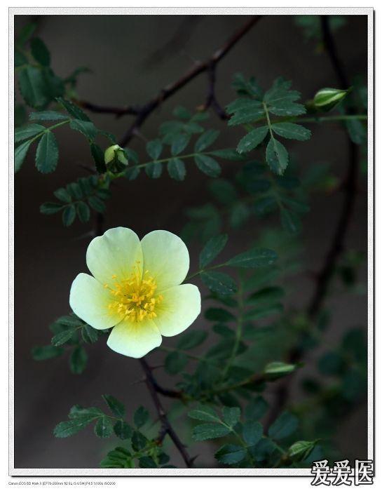 蔷薇06.jpg