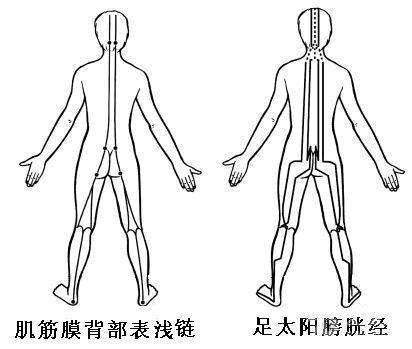 背浅线与膀胱经