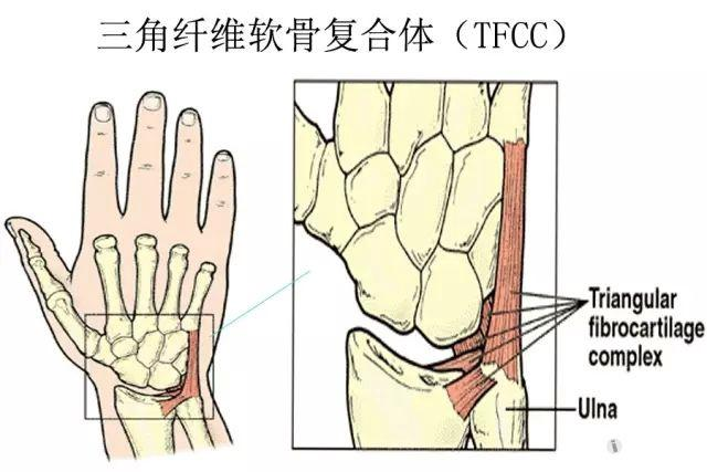 尺桡骨远端的应用解剖,你还记得吗