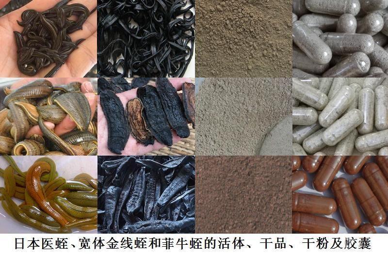 日本医蛭、宽体金线蛭和菲牛蛭的活体、干品、干粉及胶囊.jpg