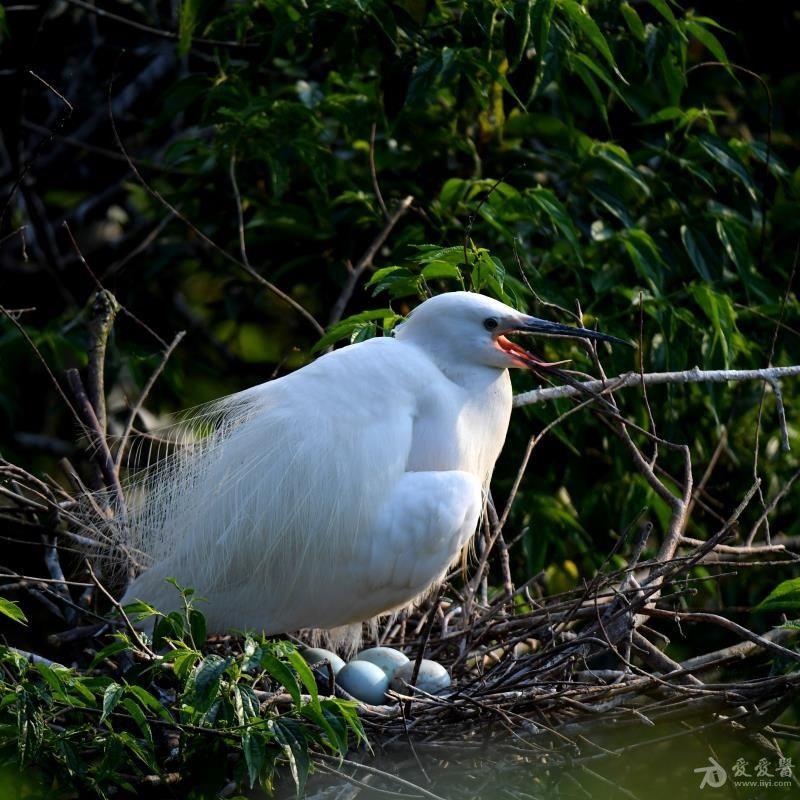 鸟1.jpg