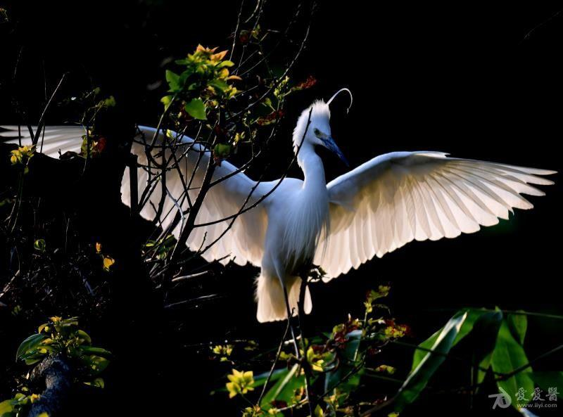 鸟3.jpg