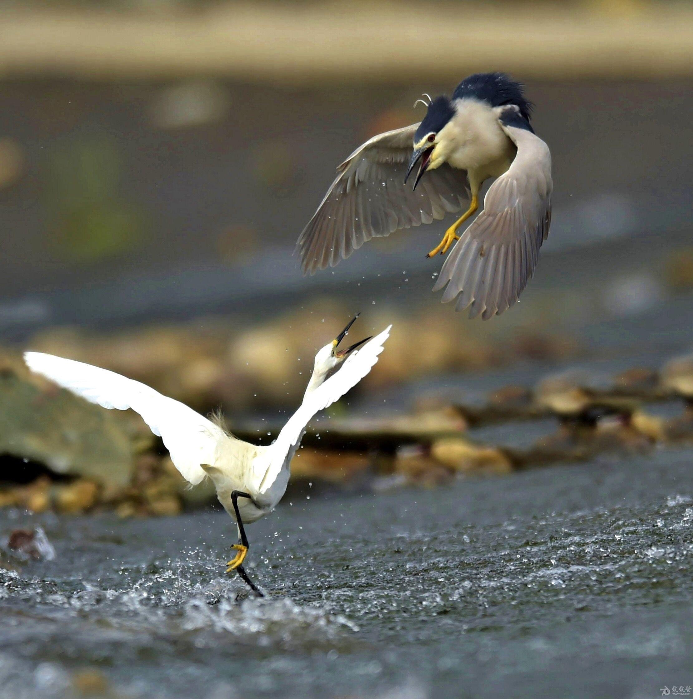 小鸟.jpg