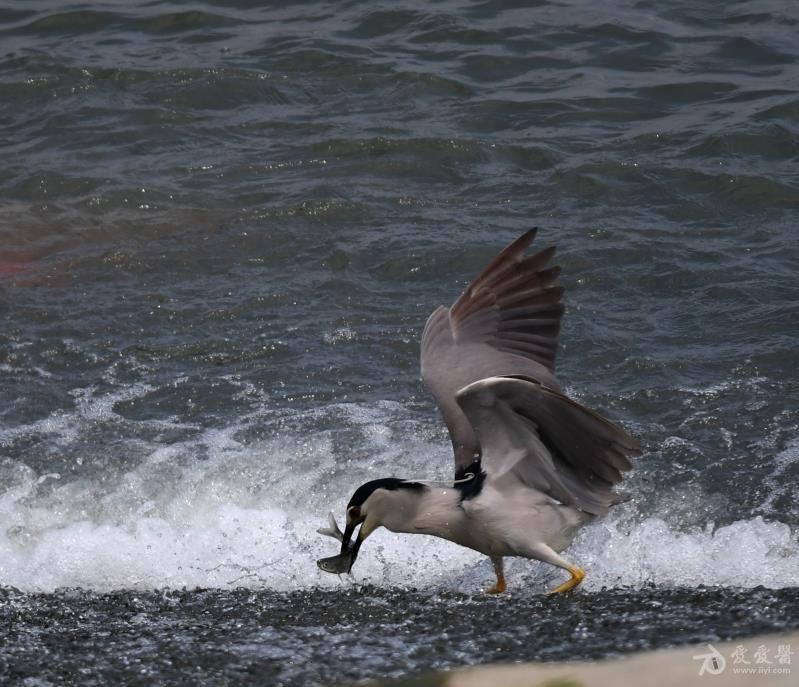 小鸟1.jpg