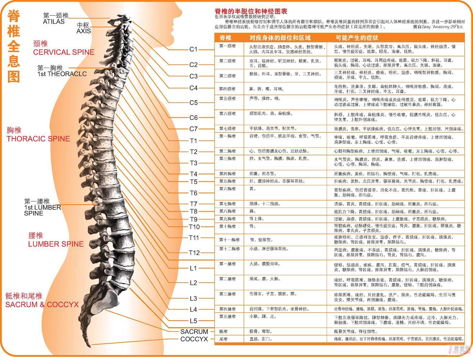 脊椎全息.jpg